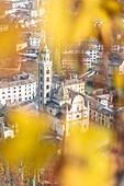 The Sanctuary of Madonna di Tirano framed from yellow leaves of vineyards, Tirano, Sondrio Province, Valtellina, Lombardy, Italy, Europe