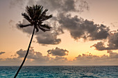 Tall palm tree and sea during sunrise, Bottom Bay, Barbados Island, Lesser Antilles, West Indies, Caribbean region