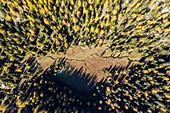 Aerial view of woodland in autumn, Valmalenco, Province of Sondrio, Valtellina, Lombardy, Italy, Europe