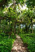 Zapatilla island, Bocas del Toro province, Panama, Central America