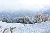 Walk in the Lärchenwiesen landscape protection area with the first snow, late autumn on the Mieminger Plateau, Tyrol