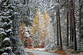 Late autumn on the Mieminger Plateau, Tyrol