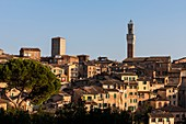 Italien, Toskana, Siena, Historisches Zentrum, UNESCO-Weltkulturerbe, Torre del Mangia