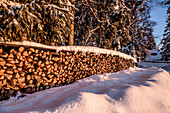 Stack of firewood in snowy winter landscape with coniferous forest at sunrise, Himmelberg, Carinthia, Austria