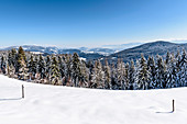 Snowy winter landscape with coniferous forest, Himmelberg, Carinthia, Austria