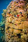 Underwater in the sea off Malekula, Vanuatu, South Pacific, Oceania