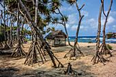 Beach with mangroves on Tanna, Vanuatu, South Pacific, Oceania