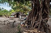 Kitchen under banyan tree on Malekula, Vanuatu, South Pacific, Oceania
