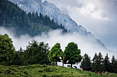 View of a mountain pasture, in the background the Zugspitze, Grainau, Bavaria, Germany, Europe