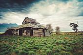 Abandoned Woolshed in Liffey, Tasmania