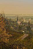 Morgendlicher Blick auf Sulzfeld am Main, Kitzingen, Unterfranken, Franken, Bayern, Deutschland, Europa