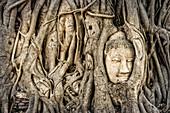 Buddha head enclosed by roots, Ayutthaya, Wat Mahatat, Thailand, Asia