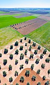 Aerial view of olive groves and cereal fields, Toledo, Castilla-La Mancha, Spain, Europe
