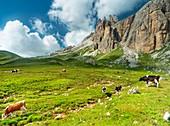 Die Dolomiten von Zoldo, Pelmo Berg
