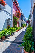 Marbella, Andalucia, Spain, Europe