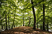 Beeches in the sunlight, confluence of Bärenbach and Eder, Kellerwald-Edersee National Park, Hesse, Germany, Europe
