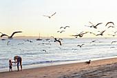 Father and son in the evening light on Santa Barbara Beach, California, USA.