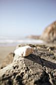 Weisser Stein auf einem Felsen am Strand von Big Sur, Kalifornien, USA.