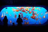 Silhouettes of visitors in front of a jellyfish tank at the Monterey Bay Aquarium in Monterey, California, USA.