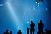 Silhouettes of visitors in front of a large aquarium at the Monterey Bay Aquarium in Monterey, California, USA.