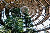 Blick auf den Aussichtsturm am Baumwipfelpfad in Neuschönau, Nationalpark Bayerischer Wald, Neuschönau, Bayern, Deutschland, Europa
