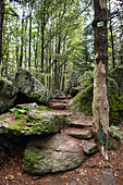 View of the hiking trail to Lusen in the Bavarian Forest National Park, Lower Bavaria, Bavaria, Germany, Europe