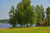 Ein kleines Sommerhäuschen mit Birkenhain am Ufer eines Sees, Järvsö, Västernorrland, Schweden