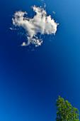 Blick nach oben in die Wolken an einem perfekten Tag, Lycksele, Norrbottens Län, Schweden