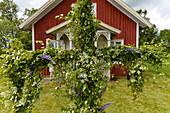 Decoration at Församlingshem for Midsummer Festival, Långaryd, Halland, Sweden