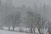 Schneefall im tiefen Winter bei Nebel, bei Femsjö, Halland, Schweden