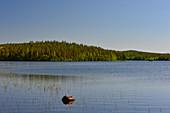 View of a forest hill at Hundsjön, near Boden, Norrbottens Län, Sweden