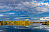 A spruce forest shines in the sunlight and clouds are reflected in the lake, Skaulo, Norrbottens Län, Sweden