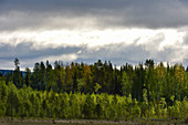 View into the forest with sun and dark clouds, near Avaträsk, Västernorrland Province, Sweden
