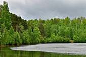 Lake and dense, green birch forest near Forsmo, Västernorrland Province, Sweden