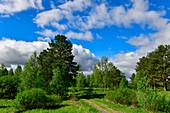 Typical Swedish landscape near Bäsksele, Västernorrland Province, Sweden