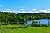 See, blühende Wiesen und Mischwald bei Flarker, Västerbottens Län, Schweden
