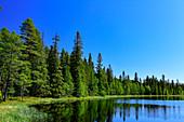 Lake with shoreline in the forest, Bjuröklubb nature reserve, Västerbottens Län, Sweden