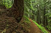 Pfad führt durch den subalpinen Wald zum Mount Townsend in der Buckhorn Wilderness, Olympic National Forest, Bundesstaat Washington, USA