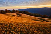 Ukraine, Zakarpattia region, Carpathians, Borzhava, Hillside mountain Munchel, Autumn landscape with mountains behind in evening light