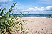 Baltic Sea beach in Bansin Dune grass in the foreground. Summer sky with light cloud cover, Usedom, Mecklenburg-Western Pomerania, Germany