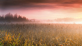 Foggy autumn morning at sunrise at Frechensee (Ostersee), Bavaria, Germany