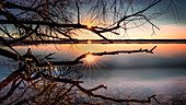 Bare tree with sun star at sunset on Lake Starnberg, St. Heinrich, Bavaria, Germany