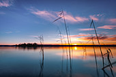 Reeds at sunrise on Lake Starnberg, Bavaria, Germany