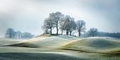 Bäume im Wintermorgen bei Bichl mit Rauhreif auf den Gräsern der Hügellandschaft, Bayern, Deutschland