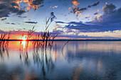 Schilf bei Sonnenaufgang am Starnberger See, Bayern, Deutschland