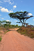 Malawi; Northern Region; Nyika Mountains; dirt road with acacias and miombo trees