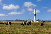 Langer Christian lighthouse in Kampen, Sylt, Schleswig-Holstein, Germany