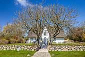 Historisches Reetdachhaus mit Friesenwall in Morsum, Sylt, Schleswig-Holstein, Deutschland