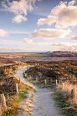 Path through the nature reserve Morsum-Kliff, Sylt, Schleswig-Holstein, Germany
