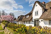 Reetgedeckte Häuser mit Friesenwall in Keitum, Sylt, Schleswig-Holstein, Deutschland